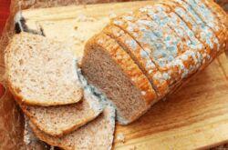 Откуда плесень в хлебнице